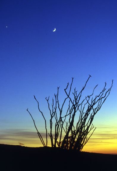 [Rising Moon and Venus from Borrego]